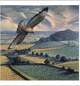 Buzzard In Flight by James Lynch