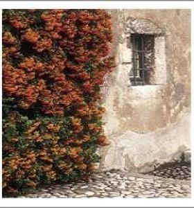 Rustic Wall & Window by Kim Sayer