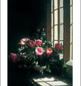 Tulips On Stone Window Sill by Paula Weideger
